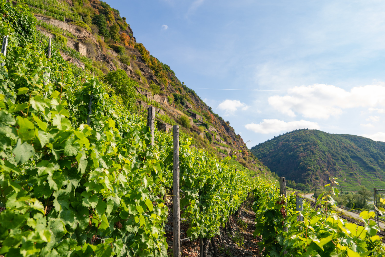 Lage Uhlen | Weingut Dötsch-Haupt