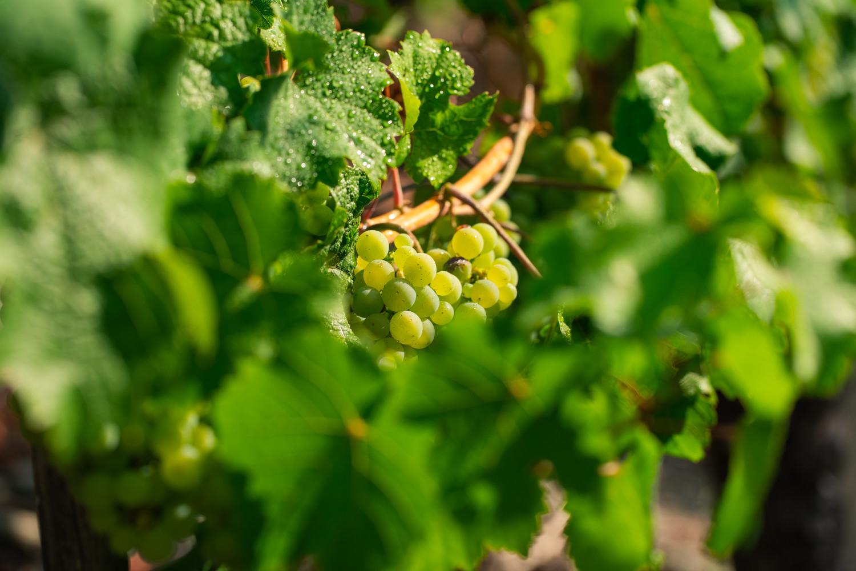 Weinwanderung für 6 Personen