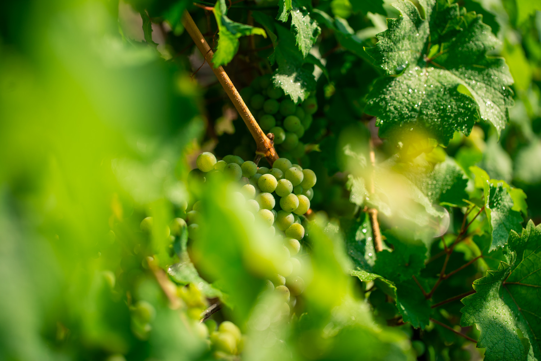 Weinwanderung für 10 Personen